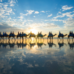 Spectacular Photos of a Camel Train In Australia