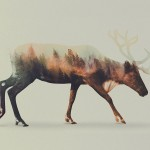 Creatively Amazing Double Exposure Animal Portraits