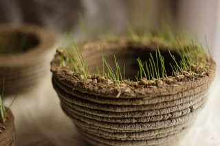 3D Printer That Prints Soil And Grass